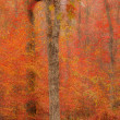 Abstract blurred background. Autumn trees — Stock Photo #38673763