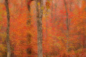 Abstract blurred background. Autumn trees — Stock Photo