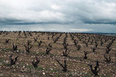Vineyards in winter cloudy day. La Rioja, Spain — Stock Photo