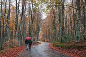 Man and woman with an umbrella walking on a forest road. Rainy autumn day — Stock Photo