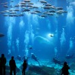 Giant Aquarium - Stock Photo