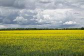 Landscape. — Stock Photo