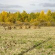Stock Photo: Autumn in Siberia