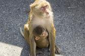 Tailand.pattayya. — Photo