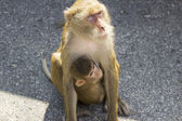 Tailand.pattayya. — Stock fotografie