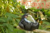 Tailand.Pattayya. — Stock Photo