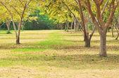 Many trees in the garden. — Stock Photo