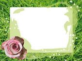 玫瑰卡 — 图库照片