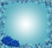 Blue roses — Stock Photo