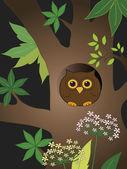 Owl bird — Foto de Stock