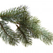 fir branch — Stock Photo #12549087