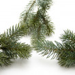 Fir branch — Stock Photo #12549205