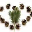 Stock Photo: Pine plugs