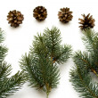 Pine plugs — Stock Photo