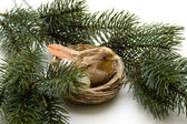 Bird in the nest — Stock Photo