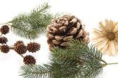 Fir branch and pine plug — Stock Photo