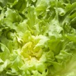Endive salad — Stock Photo