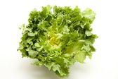 Endive salad — Stock Photo
