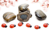 Stones with wooden beetle — Stock Photo