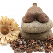 Nutshell with potpourri — Stock Photo