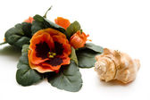 Sea mussel with flower — Stock Photo