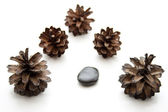 Fir Cone with black stone — Stock Photo