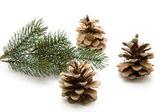 Pine stekkers — Stockfoto