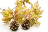Fir cone in Foliage — Stock Photo