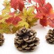 Stock Photo: Great pine plugs