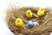 Easter fledglings — Stock Photo