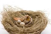 Bird in the bird nest — Stock Photo