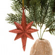 Christmas star in the fir branch - Stock Photo