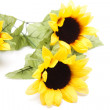 Stock Photo: Nice sunflowers