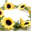 Stock Photo: Sunflower garland
