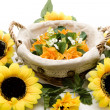 Phloem basket with sunflower - Stock Photo
