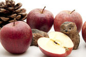 Red Apples with hedgehog and fir cone — Stock Photo
