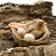 Stock Photo: Bird in the nest