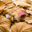 Stock Photo: Nice autumn leaves