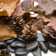 Stock Photo: Pine plugs and stones