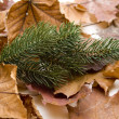 Stock Photo: Autumn leaves with fir branch