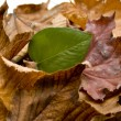 Stock Photo: Autumn leaves with plant leaf