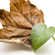 Stock Photo: Autumn and plant leaf