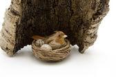Bird in the nest with bark — Stock Photo