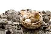 Bird in the nest — Stock Photo
