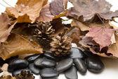 Pine plugs and stones — Stock Photo