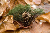 Autumn leaves with pine plug — Stock Photo