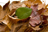 Autumn leaves with plant leaf — Stock Photo