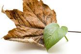 Autumn and plant leaf — Stock Photo