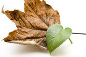 Autumn and plant leaf — Stock Photo