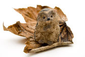 Autumn leaves with hedgehog — Stock Photo